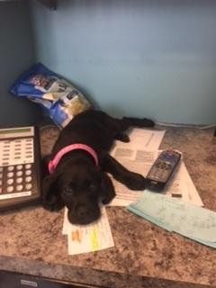 Moxie on Desk
